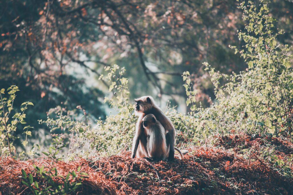 Bold teas include Golden Monkey from Fujian Province