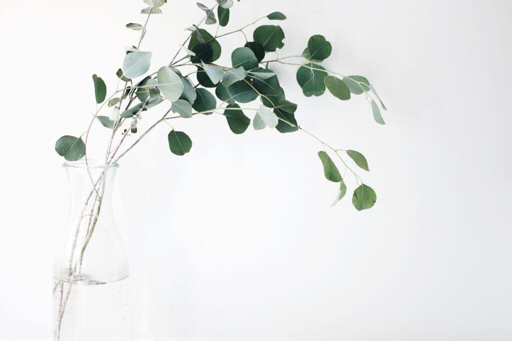 Eucalyptus for allergy tea