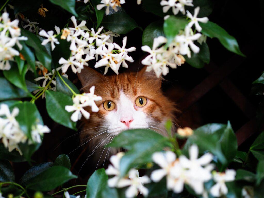 Cat in jasmine